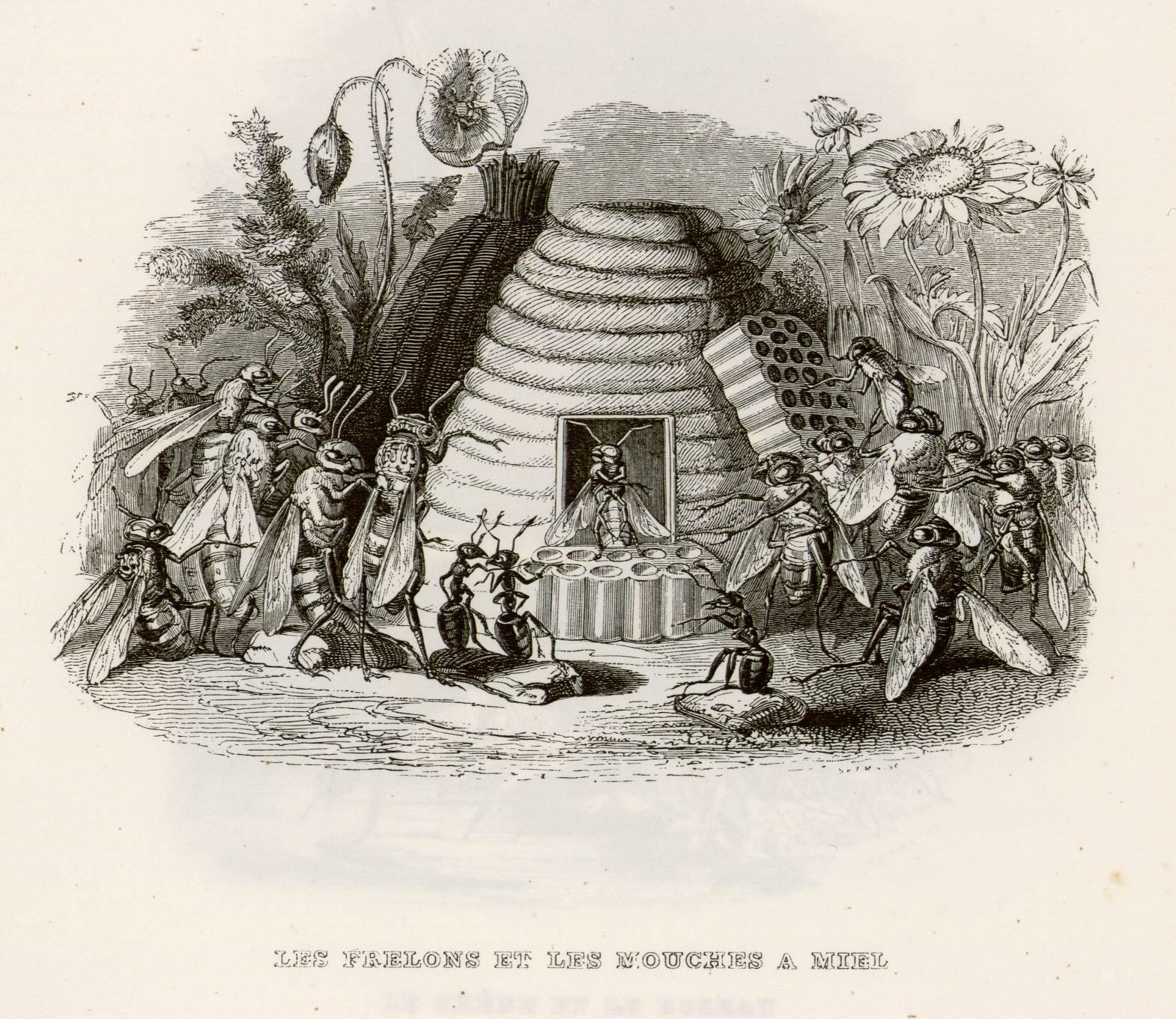 Contenu du Les frelons et les mouches à miel