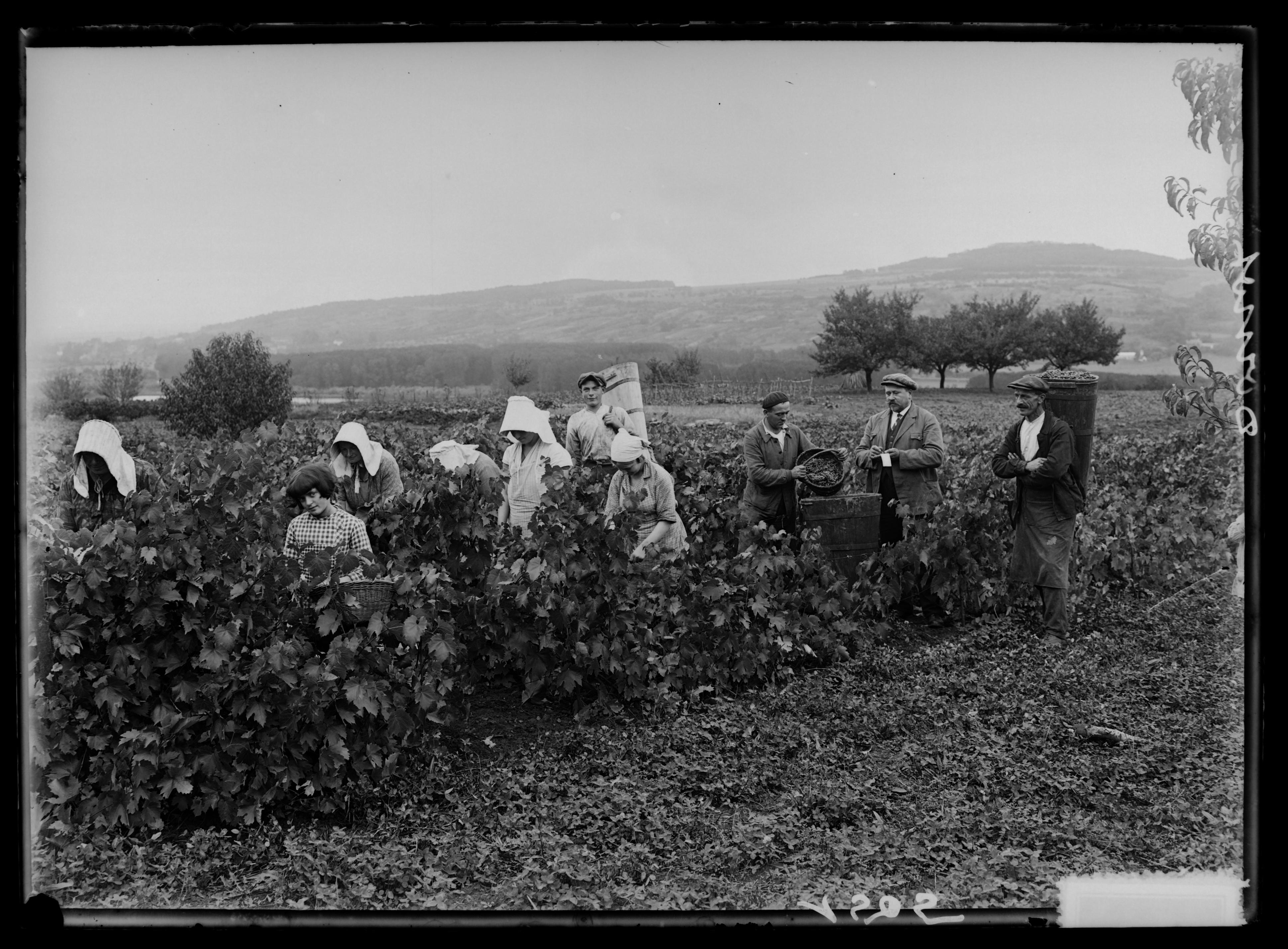 Contenu du Travail dans les vignes