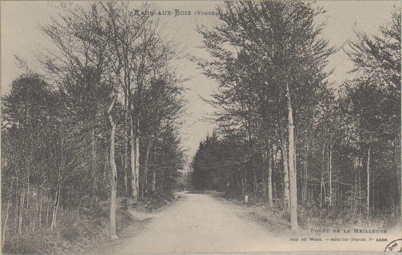 Contenu du Raon-aux-Bois (Vosges), Forêt de la Meilleure