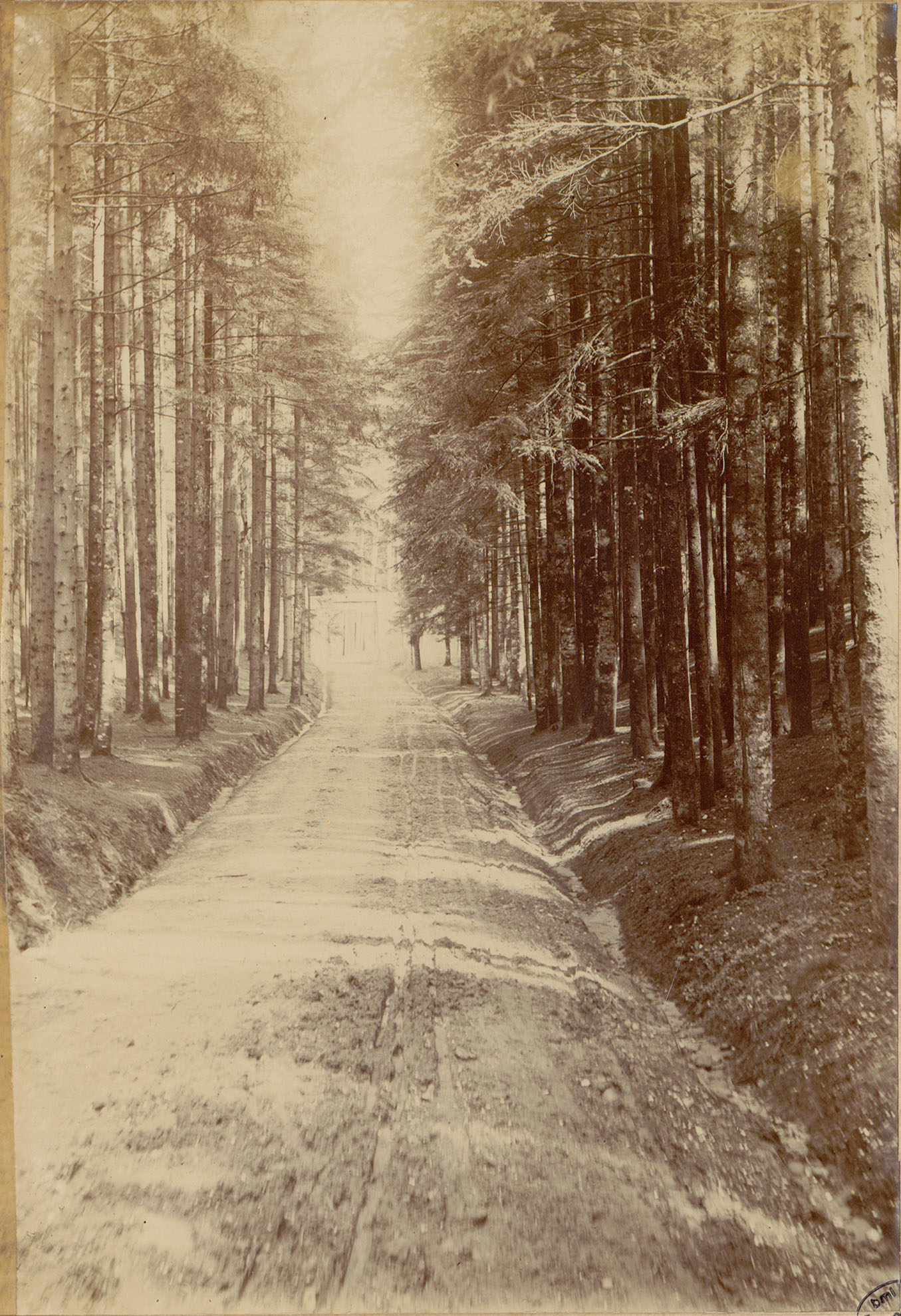 Contenu du [Sentier en forêt dans les Vosges]