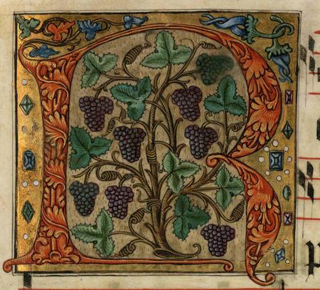 R au pied de vigne (fête de saint Louis d'Anjou)