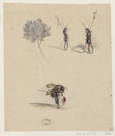 Métamorphoses / J.J. Granville