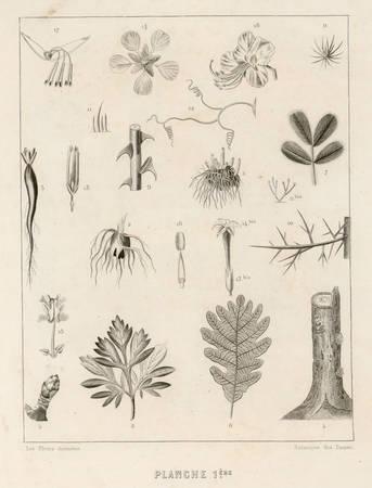 Botanique des dames : planche 1ère