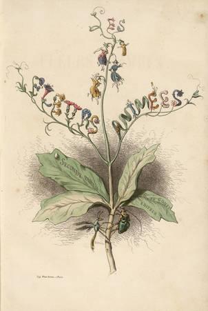Les fleurs animées : frontispice