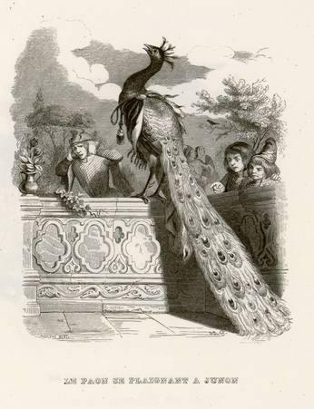 Le paon se plaignant à Junon