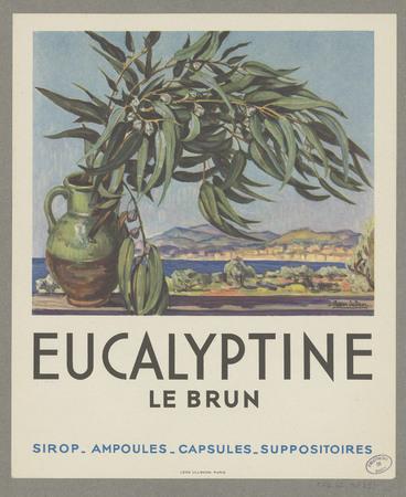 Eucalyptine Le Brun