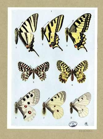 Atlas des lépidoptères : I