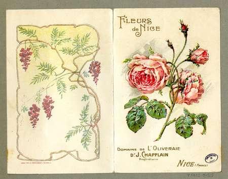 Fleurs de Nice