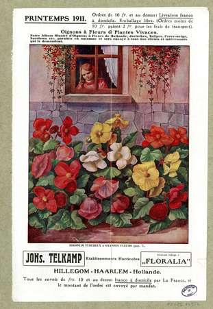 Oignons à fleurs & plantes vivaces