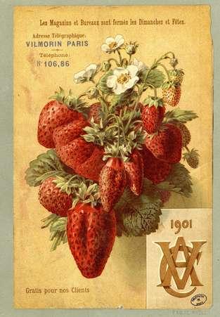Vilmorin, calendrier     1901