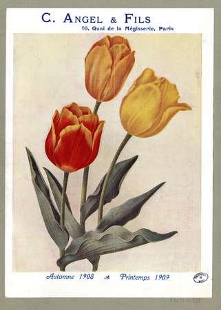 Automne 1908 & printemps 1909