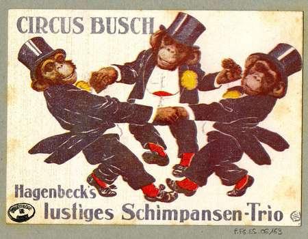 Hagenbeck's lustiges Schimpansen-Trio