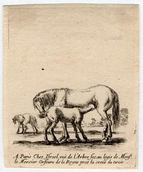 Divers exercices de cavalerie: Jument qui donne à téter à son poulain