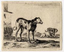 Divers animaux: Un chien tourné vers la droite