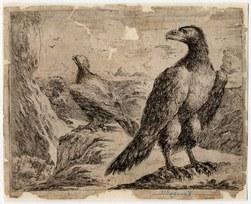 Les aigles: deux aigles regardant deux oiseaux
