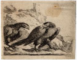 Les aigles: Un aigle tourne la tête d'un air irrité, vers un autre aigle