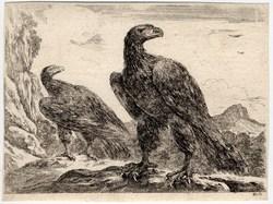 Les aigles: Deux aigles dont les corps sont dirigés vers la gauche et les…