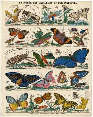 Le Musée des papillons et des insectes