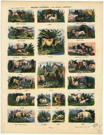 Histoire naturelle : les animaux domestiques