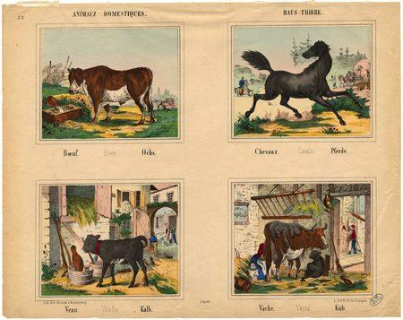 Animaux domestiques – Haus-Thiere