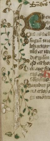Lettrine B. Bordure ornée de motifs végétaux