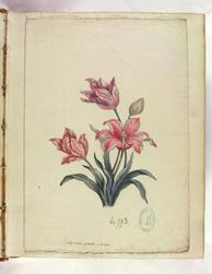 Arbres, arbrisseaux, plantes, fleurs et fruits peints par le Pt de Chazell…