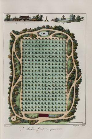 Jardin fruitier en quinconce n°9