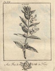 Traité historique des plantes qui croissent dans la Lorraine et les Trois-…