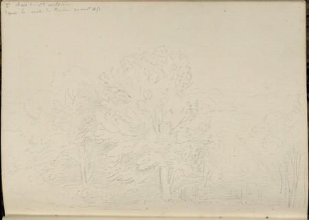 Bois de Saint-Antoine depuis la route de Bains, 30 août 1851