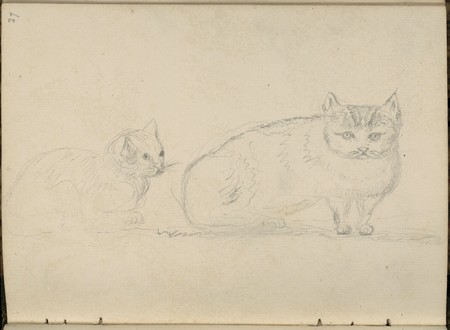 [Deux chats]