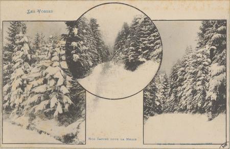 Nos Sapins sous la neige