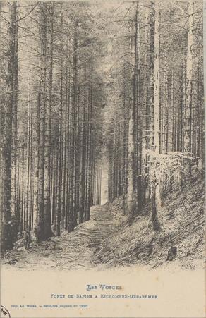 Forêt de sapin à Kichompré-Gérardmer