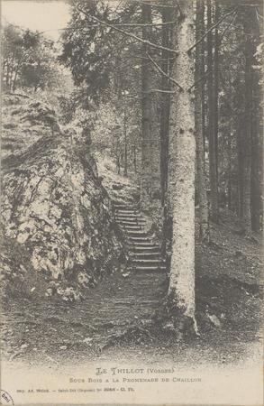 Le Thillot (Vosges), Sous bois à la promenade de Chaillon