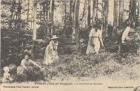 Épinal, Nid de verdure, La Cueillette des Myrtilles