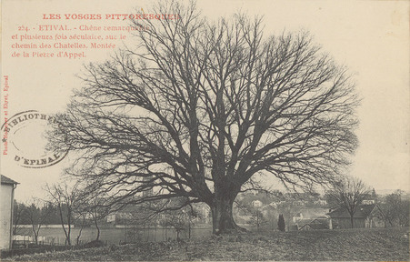 Étival, Chêne remarquable […]