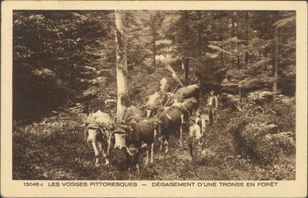 Dégagement d'une tronse en forêt