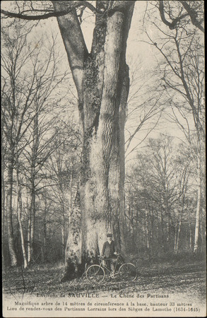 Environs de Sauville, Le Chêne des Partisans […]