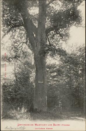 Environs de Martigny-les-Bains (Vosges), Le Chêne Henry
