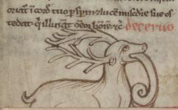 Cerf dévorant un serpent