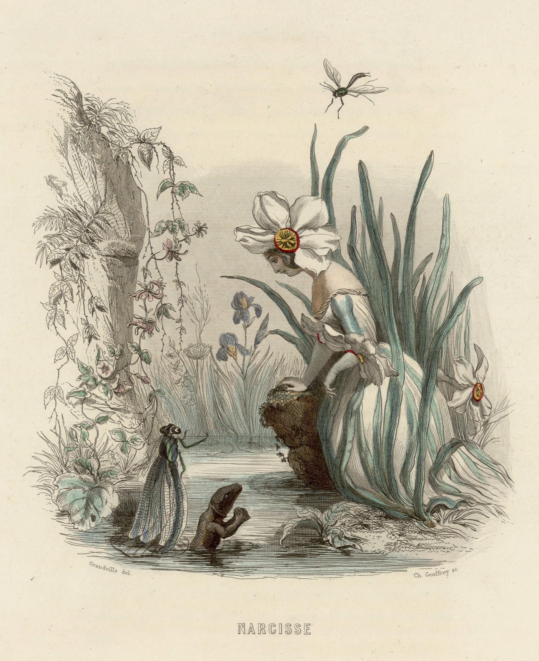 Contenu du Narcisse