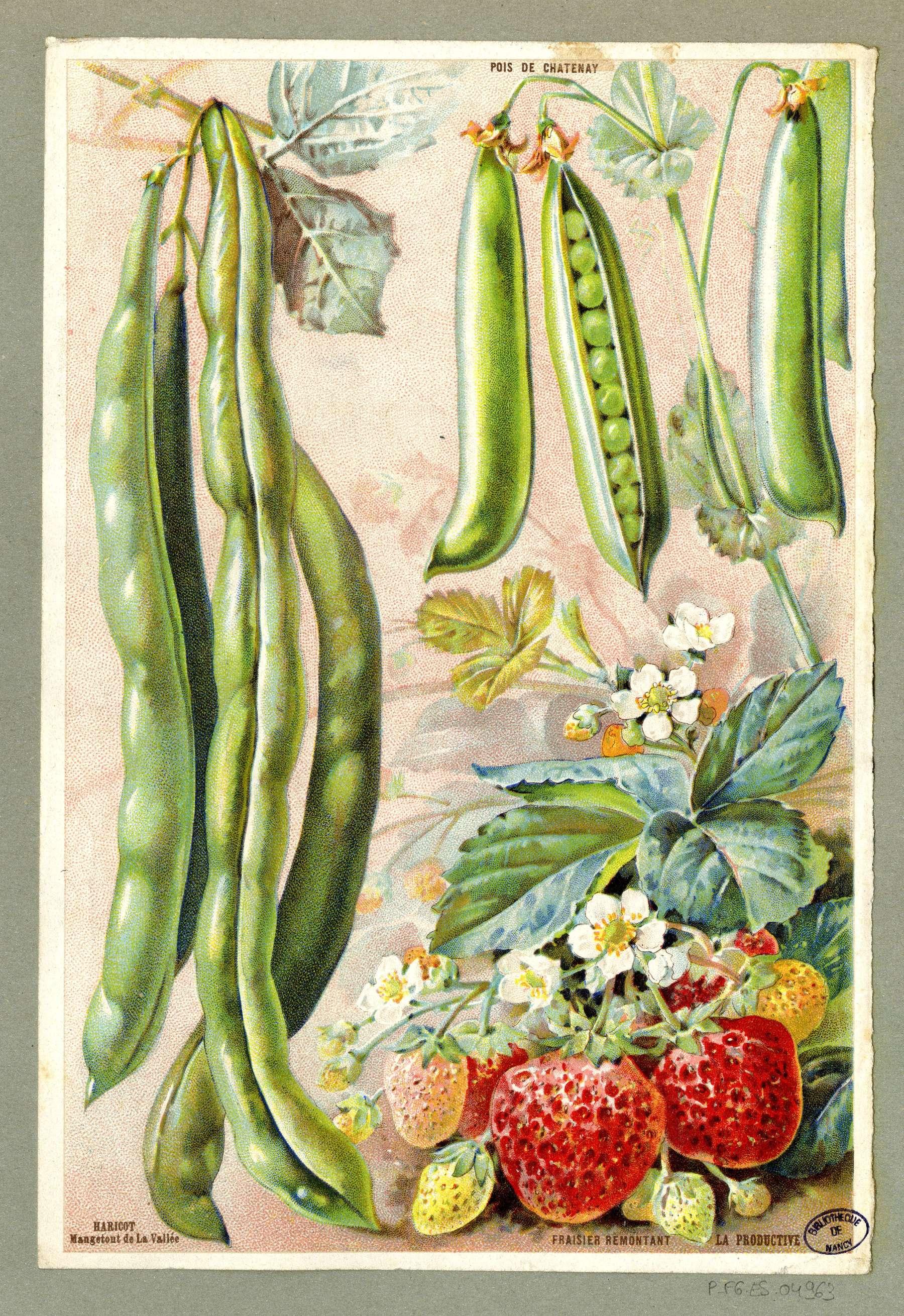 Contenu du Fruits et légumes