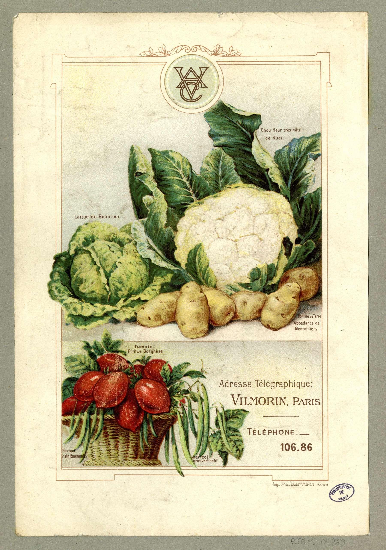 Contenu du Légumes