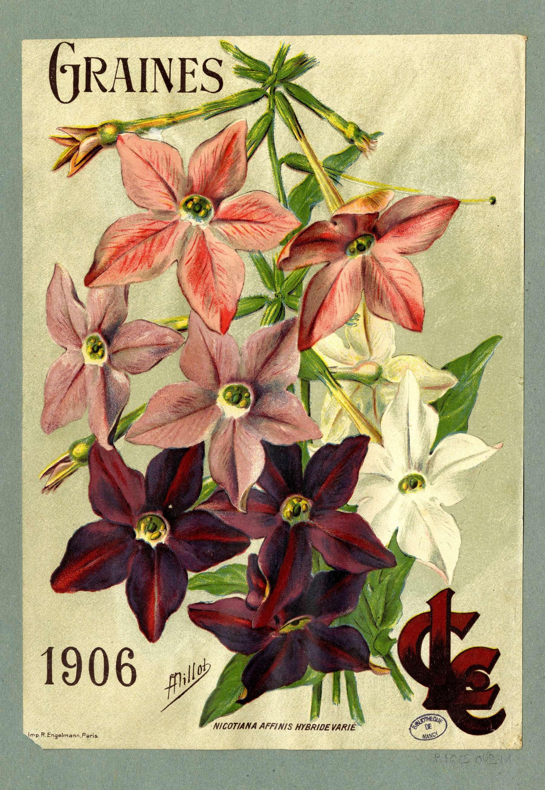 Contenu du Fleurs