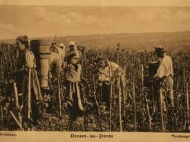Contenu du Localisation des vignes dans le Pays Messin