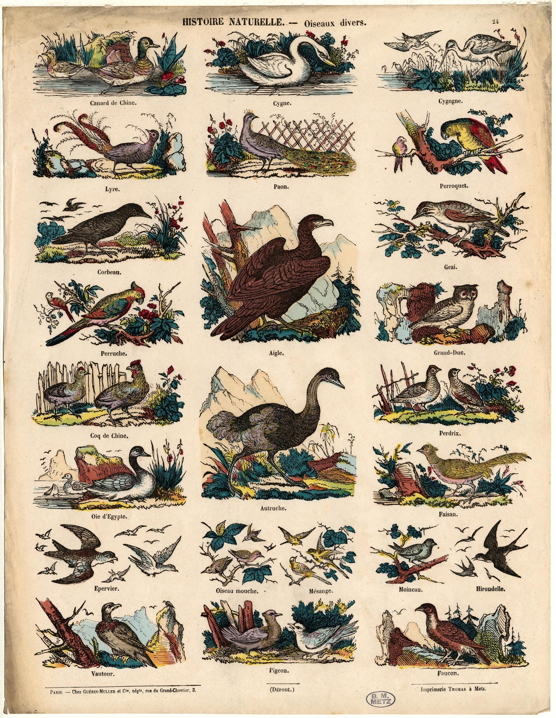 Contenu du Oiseaux