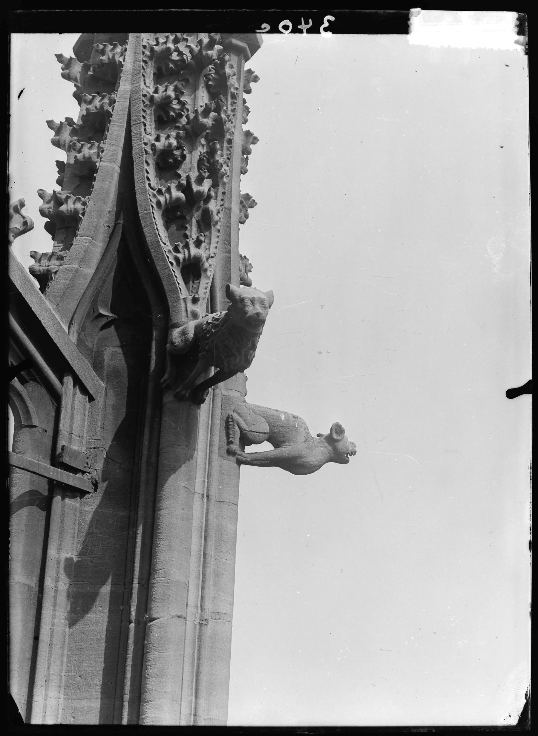 Contenu du Gargouilles sur la cathédrale Saint-Étienne