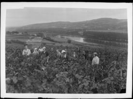 Contenu du Jadis dans les vignes messines
