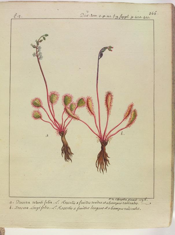 Contenu du Les  plantes magiques