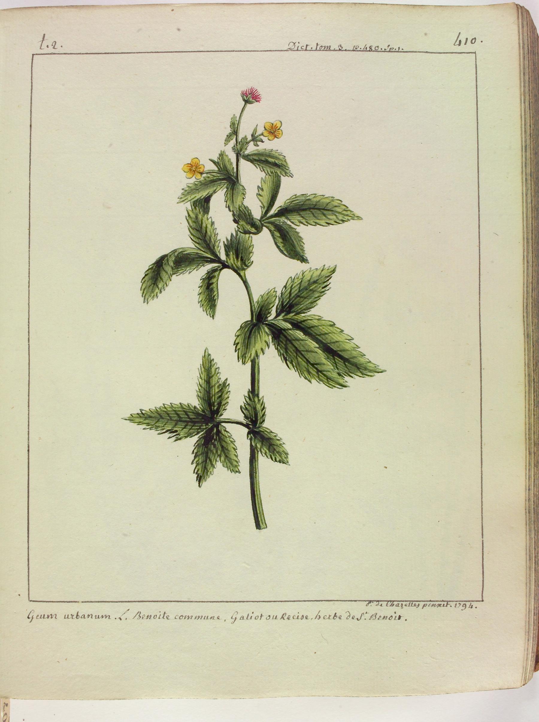 Contenu du L' Herbe de Saint Benoît