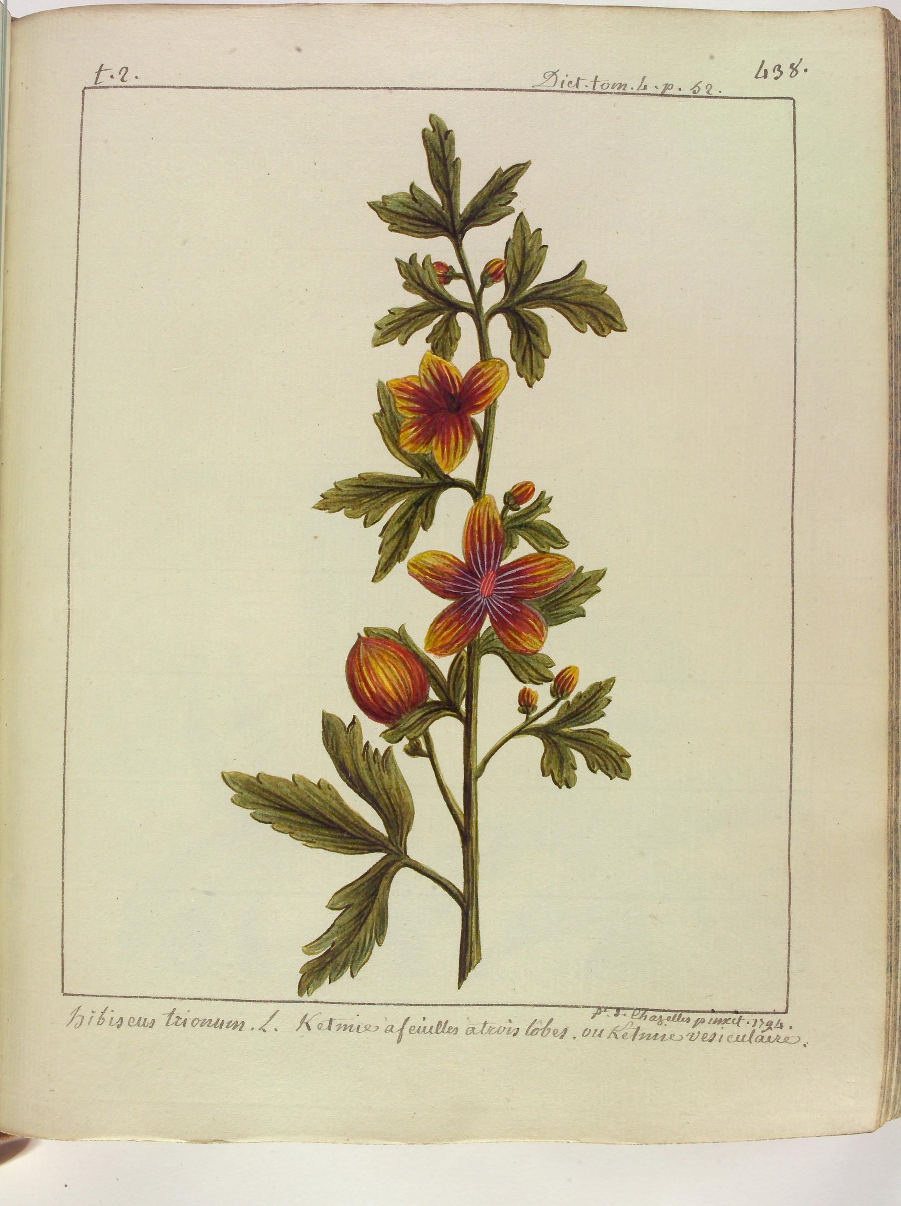 Contenu du L'Hibiscus